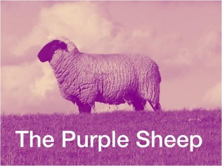 purples sheep